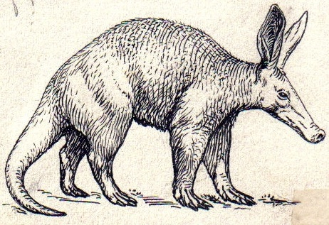 Aardvark andersom