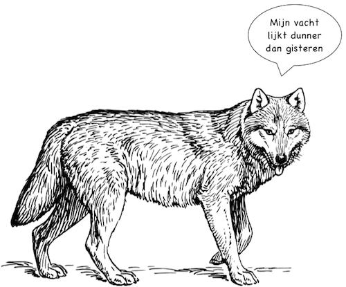 Wolf, illustratie uit 'Waarom? Daarom! Dierenverhalen'