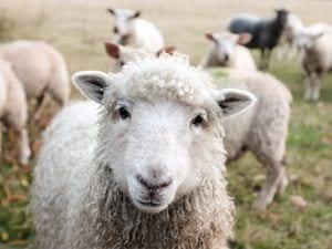 het Vriendschaap
